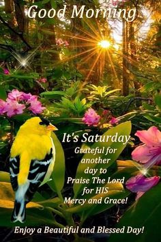 Grateful for another day to praise the lord morning beautiful good morning quotes good morning saturday good morning saturday quotes Wednesday Morning Greetings, Saturday Morning Quotes, Good Morning Happy Saturday, Good Morning Friends Quotes, Good Morning Prayer, Morning Greetings Quotes, Morning Blessings, Good Morning Wishes, Saturday Memes