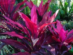 Get advice for enjoying a beautiful Florida Gardening, surroundings, or yard. Our gurus show you everything necessary to effectively florida gardening landscaping Florida Landscaping, Florida Gardening, Tropical Landscaping, Backyard Landscaping, Landscaping Ideas, Bali Garden, Balinese Garden, Garden Plants, Tropical Backyard