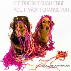 Daily Dogspiration from DoxiesDownUnder.com