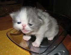 D'aw don't cry kitty :(