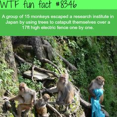 Monkeys escaped a research institute in Japan - WTF fun facts Wtf Fun Facts, Funny Facts, Crazy Facts, Random Facts, Funny Animals, Cute Animals, What The Fact, Mind Blowing Facts, Memes Of The Day