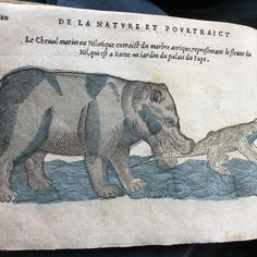 Hungry hippo from Belon Poisson 1555