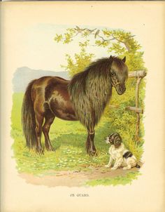 Vintage Edwardian Ernest Nister Print Dark Bay Pony Tied Up To Fence in Field Spaniel Puppy Sitting At His Feet Vintage Bookplate Field Spaniel, Puppy Sitting, Spaniel Puppies, Farm Yard, Zebras, Dog Friends, Pony, Printable Vintage, Victorian