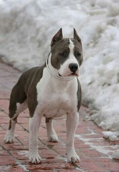 Beautiful Pit