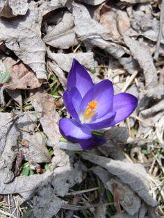 Der Frühling in den Bergen erwacht langsam aus dem Winterschlaf und zeigt sich farbenfroh und kontrastreich. Freuen wir uns auf den Sommer sowie auf die Neueröffnung des Hotel AUSZEIT.  www.hotelauszeit.ch www.facebook.com/hotelauszeit www.instagram.com/hotelauszeit