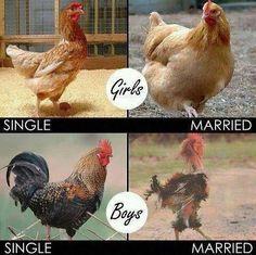 Single life vs Married Life-- not always true, but definitely funny!!!