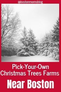 Pick Your Own Christmas Tree Farms Near Boston Christmas Tree Farm Tree Farms Boston Mom
