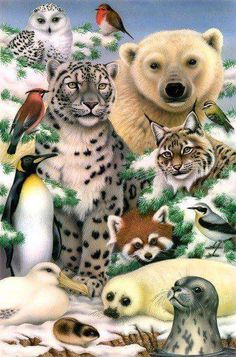 Trademark Global Howard Robinson 'Winter Animal Portrait' Canvas Art - 24 x 18 x 2 Animals And Pets, Baby Animals, Funny Animals, Cute Animals, Artic Animals, Wild Animals, Wildlife Art, Big Cats, Pet Portraits
