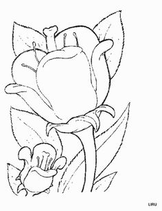 find this pin and more on bordado damas voluntarias flower page printable coloring sheets - Painting Sheets