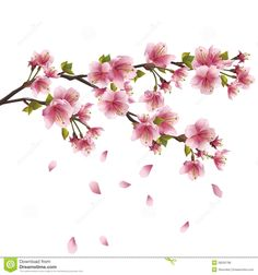 cherry blossom drawing - Google'da Ara