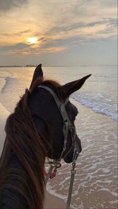 Cute Horses, Pretty Horses, Horse Love, Cute Baby Animals, Funny Animals, Cavalo Wallpaper, Horse Girl Photography, Horse Wallpaper, Most Beautiful Horses