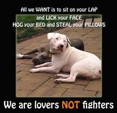 Dogs are only mean if there mistreated and treated badly and not loved. Love your pets.
