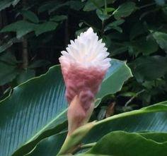 A beautiful flower that looked like it had a white light bulb inside it.Hawaii Yoga and Spa Retreat, https://womenwellnessretreats.com/art-of-selfcare