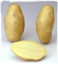 Variété Ditta - Le plant français de pomme de terre