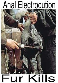 Don't be a dirtbag and wear fur. You promote animal cruelty for not just one day or one animal, but for the entire life of many, many animals.