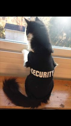 Ever vigilant and on alert. #Cute