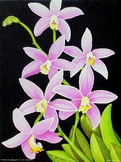 Image detail for -Tamiami International Orchid Festival | Vendors