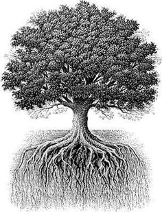 The oak tree's roots mirror its branches and stretch as far below ground as the branches do above.