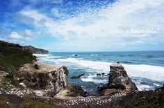Life's a Fairytale: Extremely Beautiful Beach for Your Summer Time - Muriwai Surf Beach
