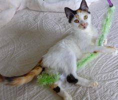 Adopted- Cammi 35175091