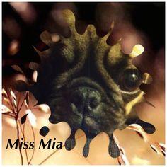 Miss Mia