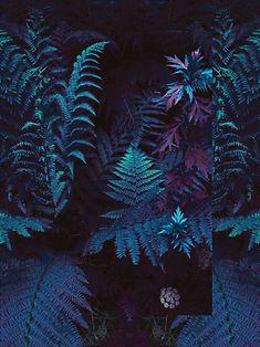 Imagem de blue, plants, and wallpaper