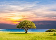 Seascape Sunset Horizon Abstract Tree Canvas Wall Art Picture Home Decor Print Image Nature, Nature Images, Nature Pictures, Scenery Pictures, Wall Art Pictures, Free Pictures, Free Images, Widescreen Wallpaper, Of Wallpaper
