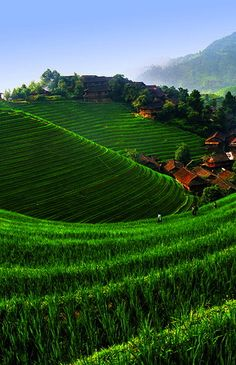 ˚Tea Fields - China