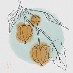 "Iris Stam's Instagram post: ""Chinese lantern seed pods. I always liked them, they are so decorative! .  #makingarteveryday #mae2020 #makingarteveryday2020 #drawingdaily…"" Chinese Lanterns, Seed Pods, Iris, Watercolor Paintings, Seeds, Natural, Drawings, Instagram Posts, Decor"