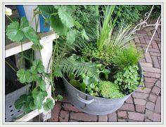 Zinc tub with waterplants