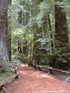 Photo of the Discovery Trail, which features old growth redwoods