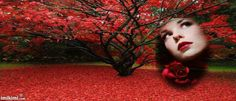 Red leaves... amazing! Fall Facebook timeline cover pic. You can click to add your own face instead of hers, save and share for free