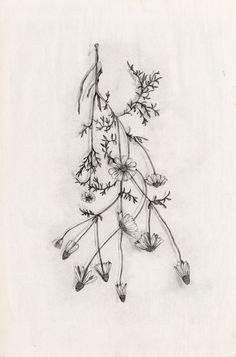 Simple Wildflower Tattoos \x3cb\x3etattoos\x3c/b\x3e on pinterest david hale, \x3cb\x3ewildflower tattoo\x3c/b\x3e