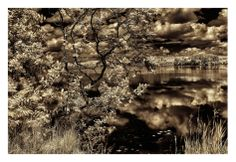 Infrared Pond 1 Print by Jean-François Dupuis at Art.com