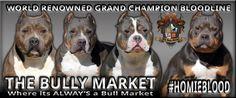 The Bully Market