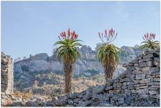 The Great Zimbabwe ruins