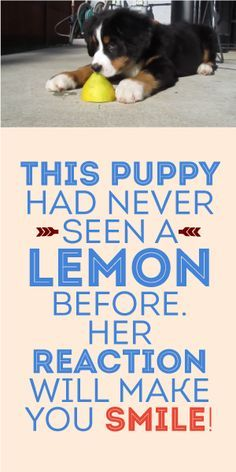 This Puppy Had Neve Seen A Lemon Before. Her Reaction Will Make You Smile! :)