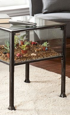 Terrarium End Table. Such a cool concept. Could do so many things with this.