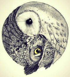 love drawing art animals cute hipster vintage indie Grunge animal nature yin yang owl (Cool Art Circles)