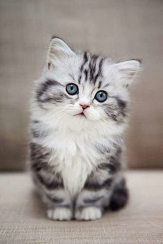 Cat love 🧡🧡🧡 cuddly cats - Cats and kittens - cute kitten - baby cat - beautiful cats - cat too cute # chatmart - ChatJadore 💛/Thème Chats - - Amour de chat 🧡🧡🧡 chats calin – Chats et chatons- chaton mignon -bébé chat -beaux chats- chat trop mignon Cutest Animals On Earth, Cute Baby Animals, Funny Animals, Funny Cats, Animals Kissing, Animals And Pets, Pretty Cats, Beautiful Cats, Animals Beautiful