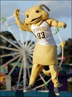 Sammy the Banana Slug---Mascot of the UC Santa Cruz Banana Slugs. Football Usa, College Football, Uc Santa Cruz Mascot, Santa Cruz Banana Slugs, The Slug, Sports Advertising, Helmet Logo, Team Mascots, Sports Images