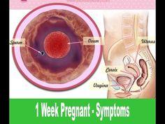 1 Week Pregnant - Symptoms - YouTube