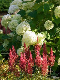 Mix Perennials with Shrubs
