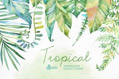 Tropical watercolor leaves by OctopusArtis on @creativemarket