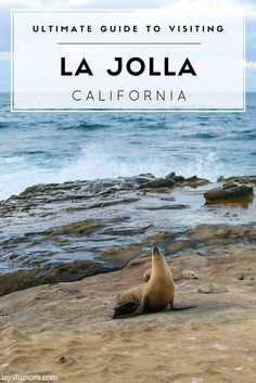 Learn where to stay, the best things to do, where to eat and more for your La Jolla vacation. via @lajollamom