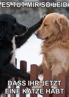 74 Besten Hunde Lustiges Lustige Hundebilder Bilder Auf Pinterest