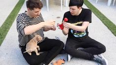 dan and phil with cats new pupper