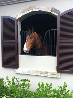 Stable Exteriors- Fabulous shutters on the stalls | The Carousel Horse | carouselhorsetack.com