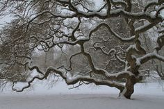 winter landscapes | Winter Tree - Nature Photography - Landscape Art Print - Snow ...