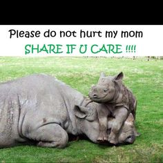 People are killers for ridiculous reasons...stop poaching...